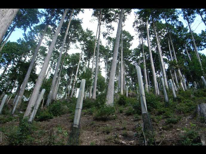 貴船山(古事の森)