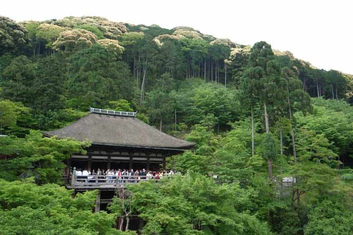 高台寺山(シイ開花)