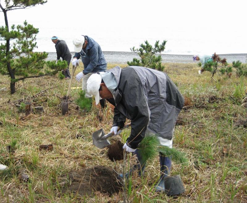 ふれあいの森GG作戦:七里御浜国有林