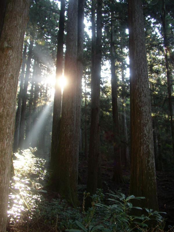 大又文政スギ植物群落保護林:大又国有林
