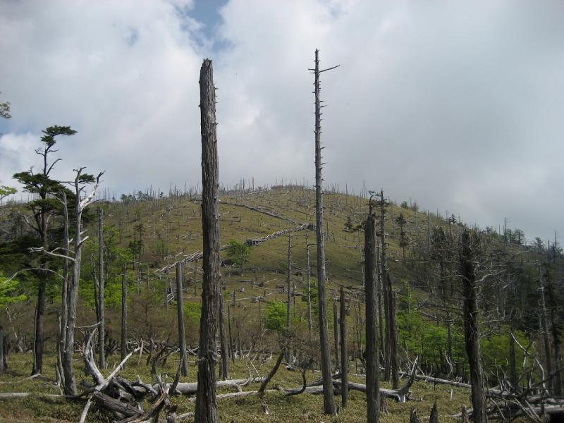 大台ケ原周辺:大杉谷国有林
