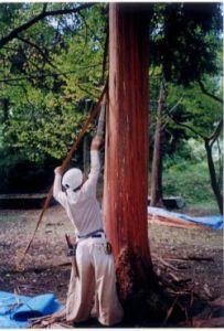 12.檜皮採取林:野山国有林