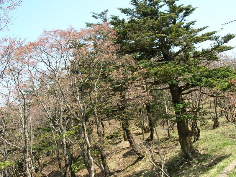 19.モミ・ツガ植物群落保護林
