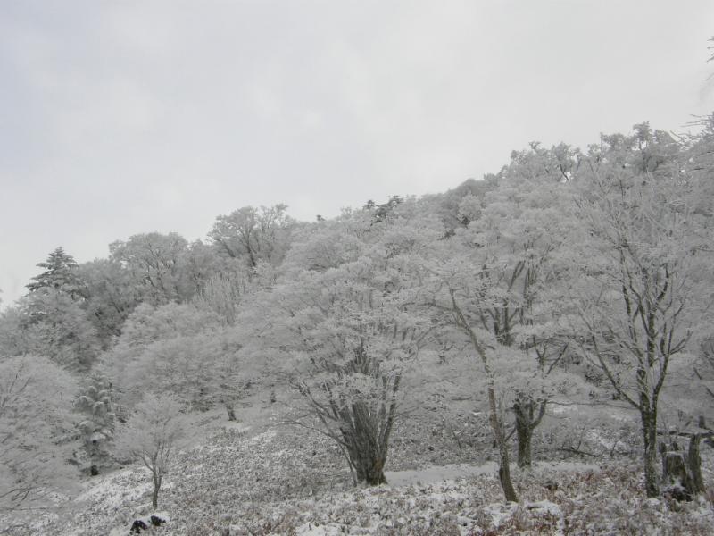 32.栃尾辻の霧氷