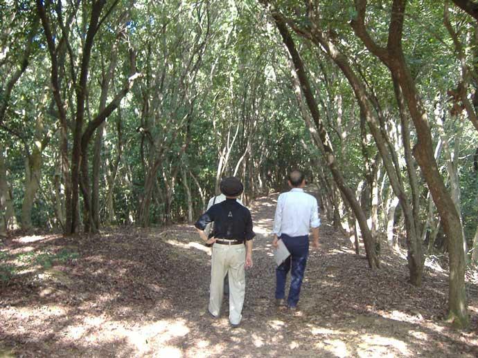 繰山自然休養林カナメモチのトンネル