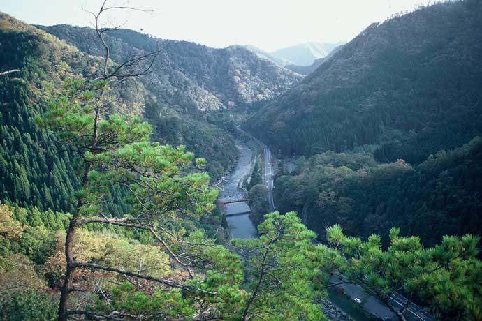 宇甘渓谷風景林