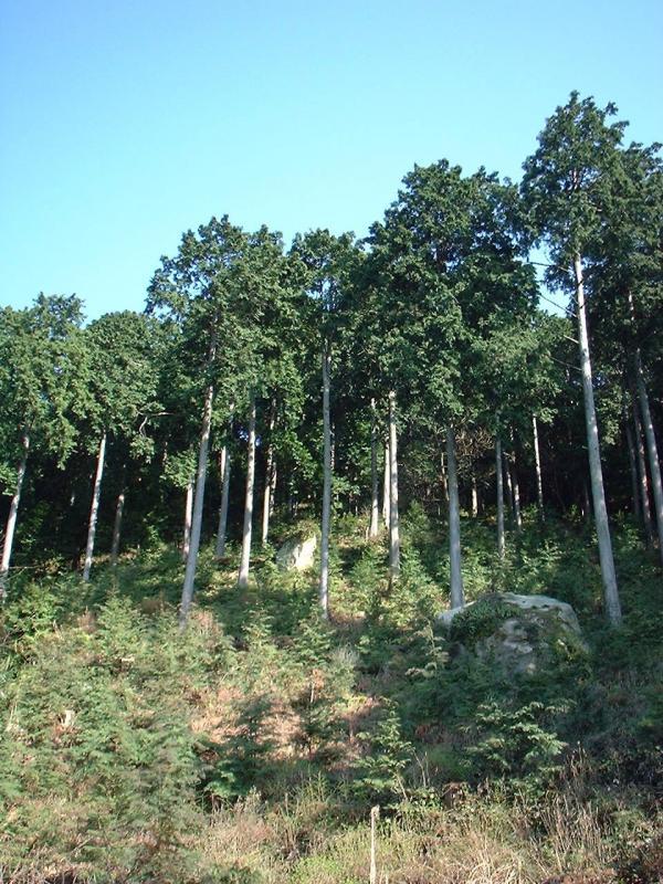 奥島山呼吸林の複層林施業地