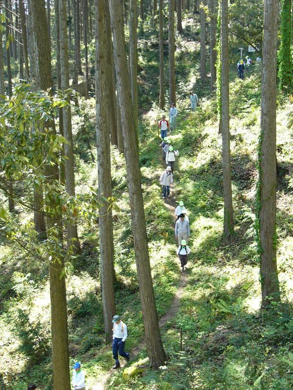 奥島山国有林内のハイキング