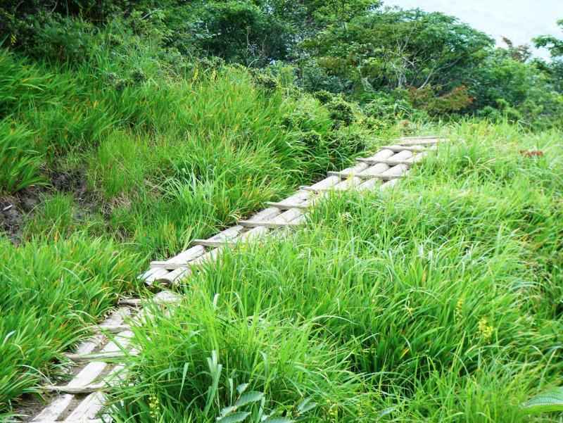 三国山湿原植物群落保護林
