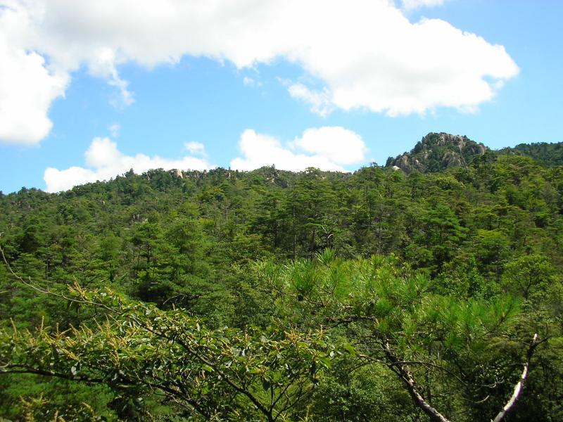一丈野国有林と天狗岩