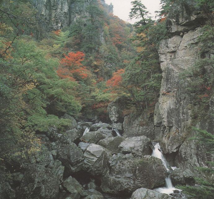 匹見峡風景林(三ノ滝国有林・匹見町)