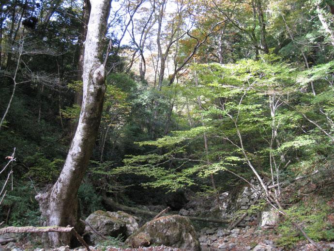 鹿足河内渓谷風景林