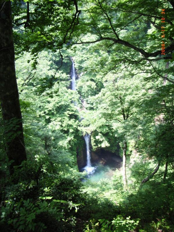 大山滝:本谷奥国有林風景林