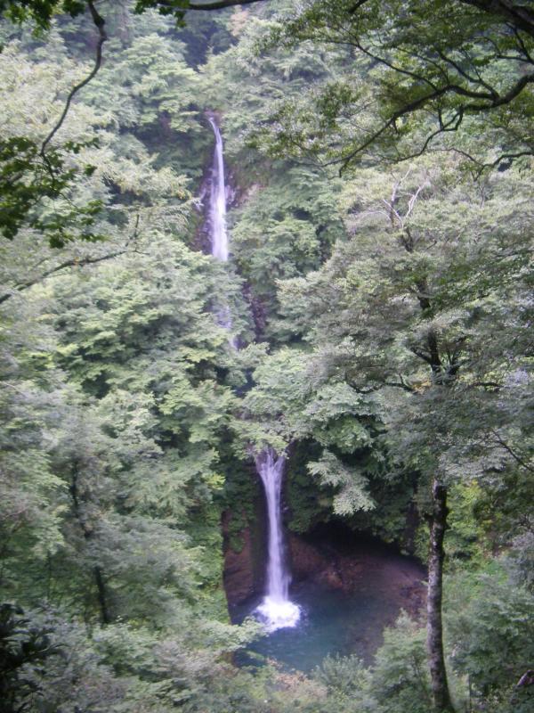 大山滝:本谷奥国有林の風景林