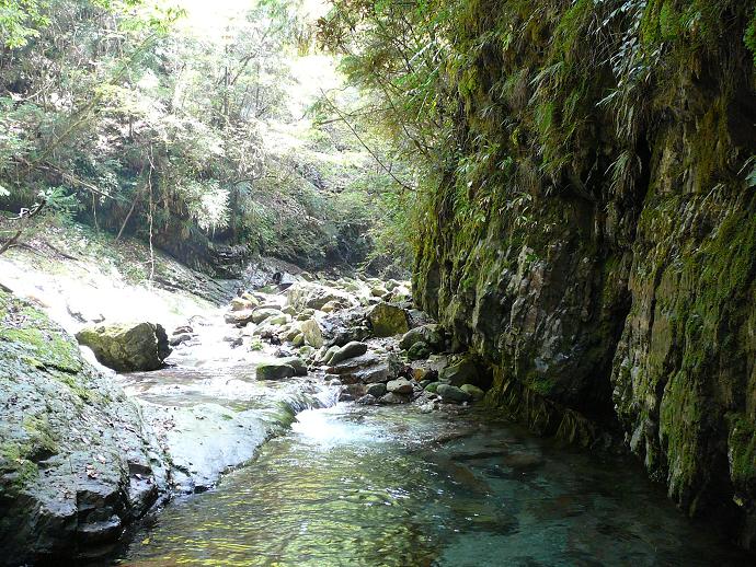 大塔山国有林の清流