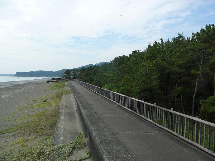 大浜防風林