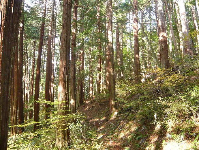 コウヤマキ植物群落保護林とセラピーロード