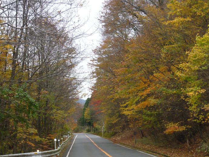 日光山国有林の紅葉