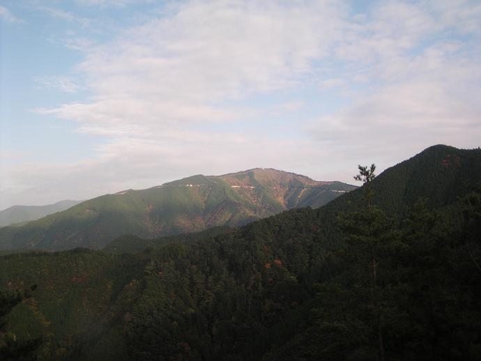 笠塔山国有林頂上付近を望む