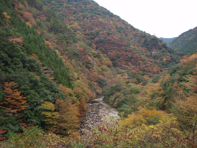 紅葉の前の川国有林