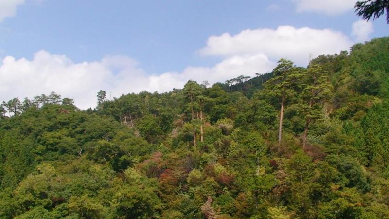 滑松、アカマツ、ブナ等の林木遺伝資源林