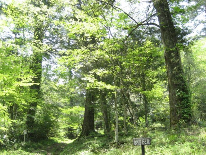 毛利藩モミ林(全国的にも稀である):滑山国有林