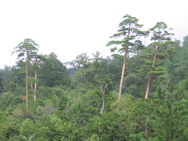 -滑松-:滑山国有林