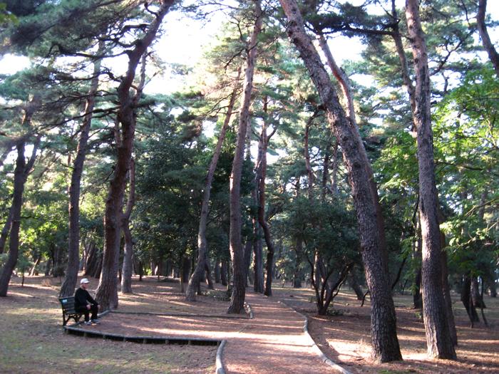 アカマツ林 【松原】