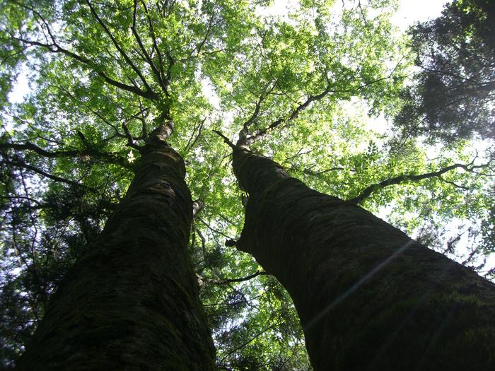 休養林内風景②