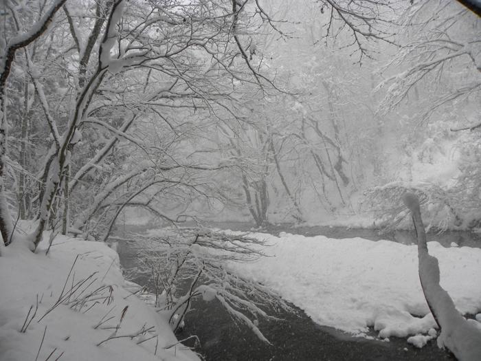 休養林内風景③