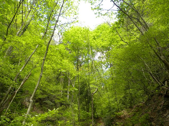 休養林内風景⑦
