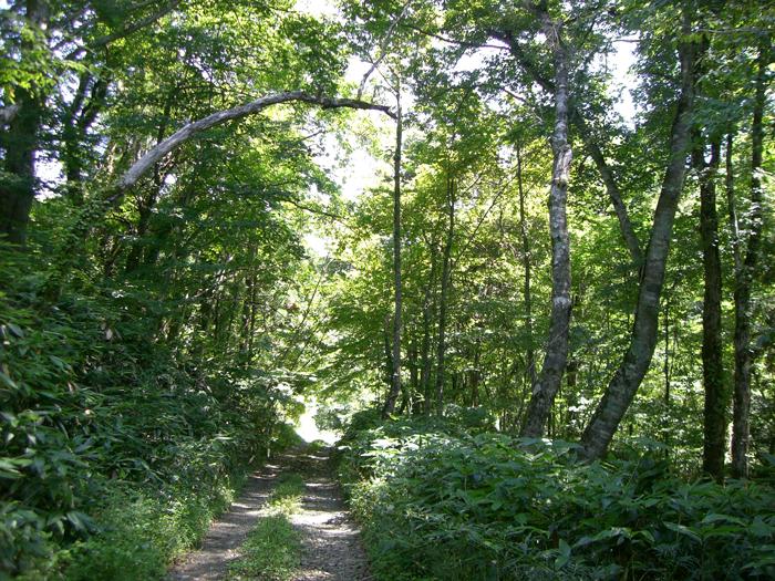 十方山林道