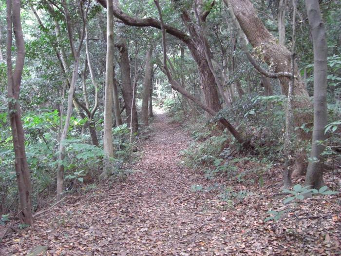 林内遊歩道②