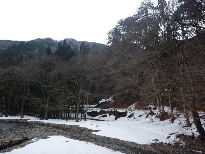 赤西自然観察教育林の全景