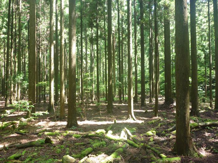 赤西自然観察教育林の近景