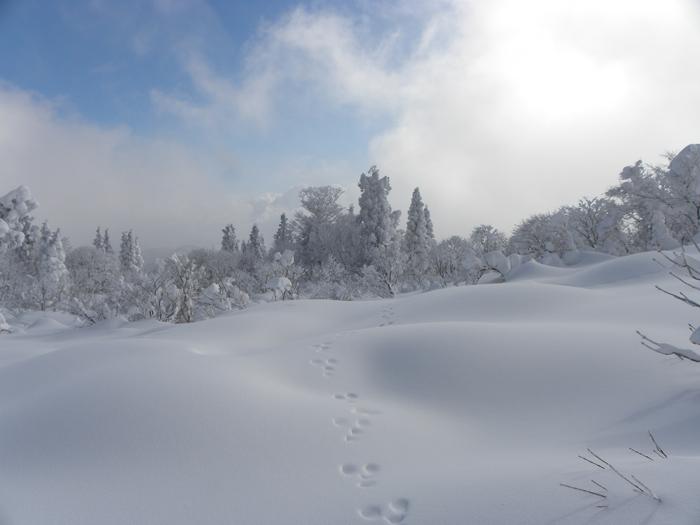 尾根の樹氷②