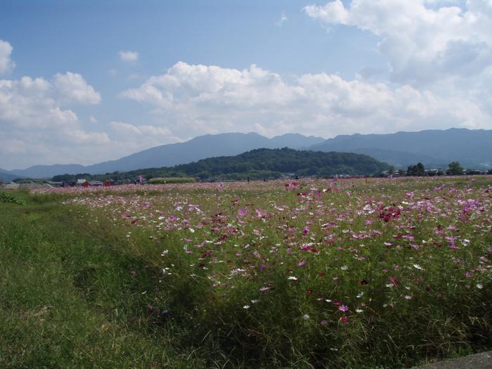 「藤原京から望む香久山」 【大和三山】