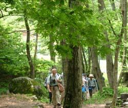 森林インストラクターとともに林間を行く参加者