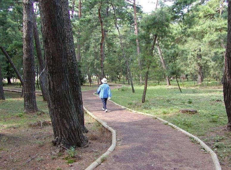 防災林造成事業(福井県)