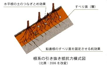 森林の機能2