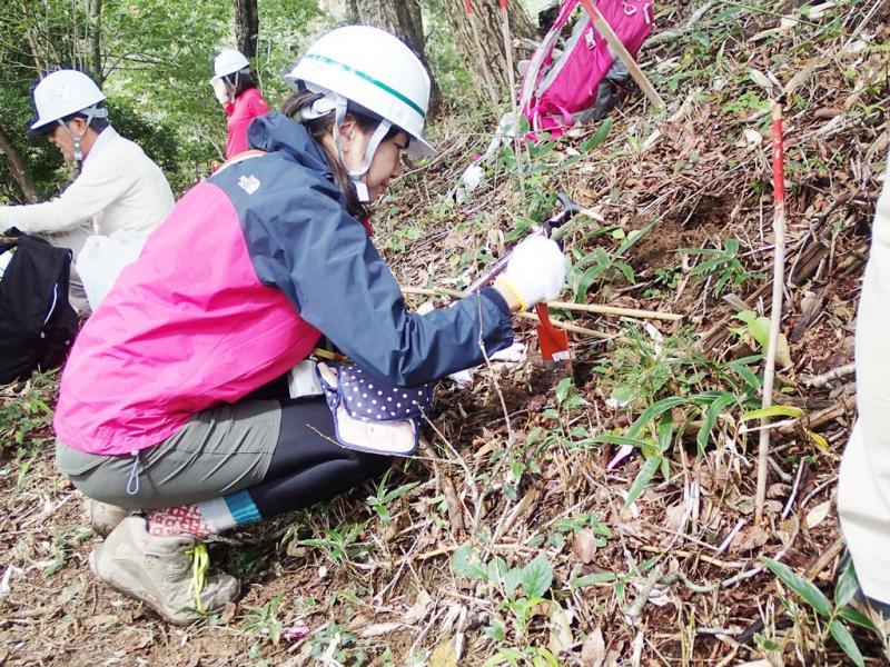 参加者による稚樹植栽の様子