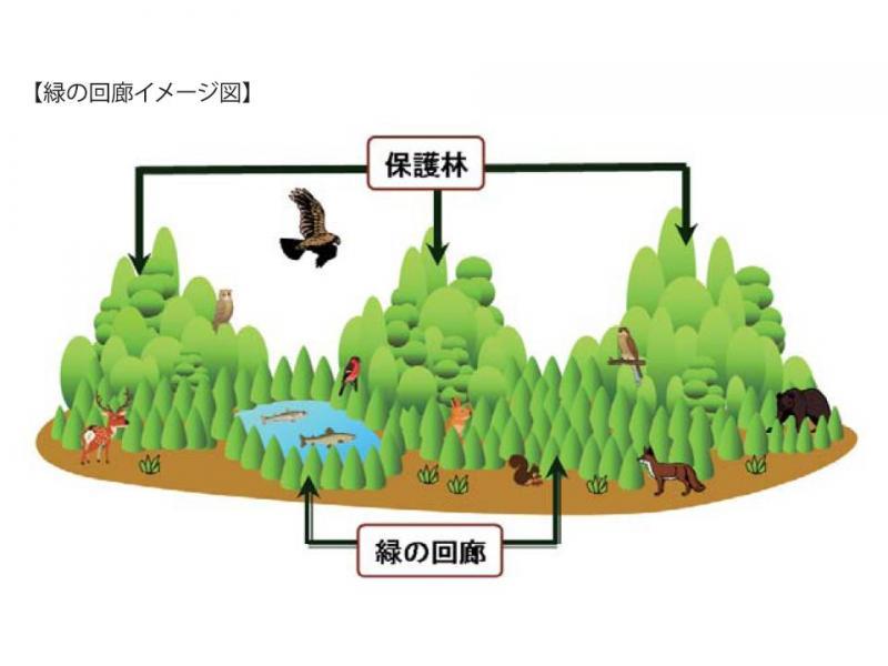 緑の回廊概念図