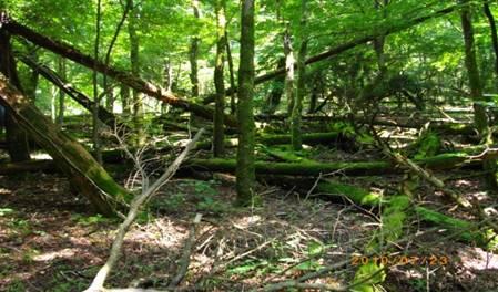 人工林の被害