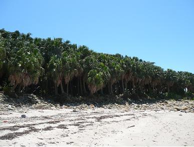 枇榔島自然観察教育林-植物郡