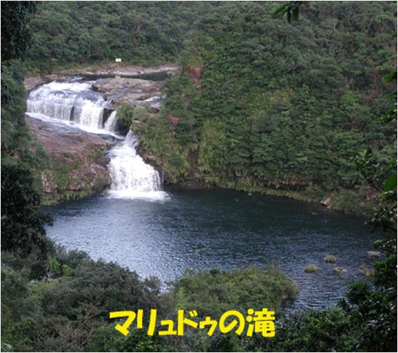 西表自然休養林ーマリュドウの滝