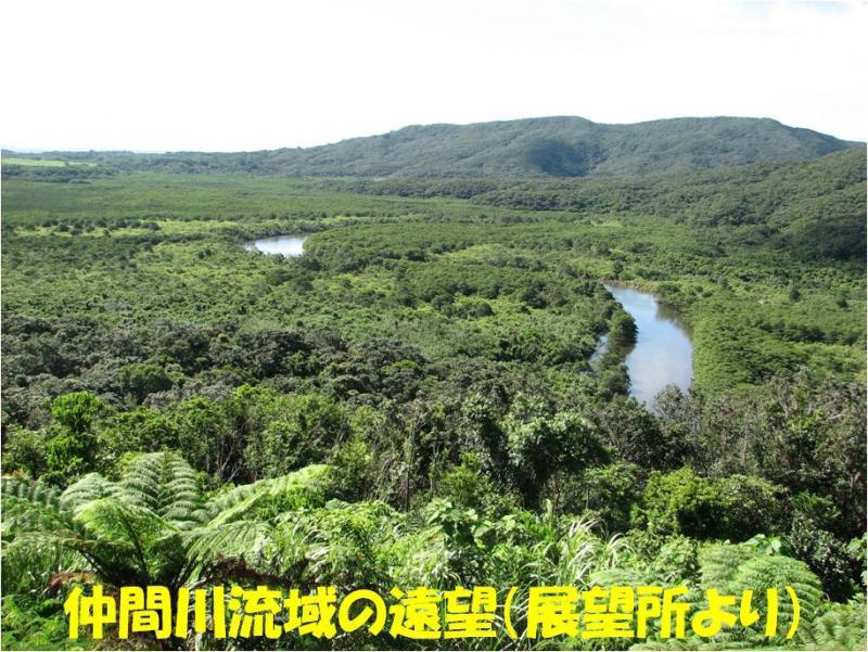 西表自然休養林ー仲間川眺望