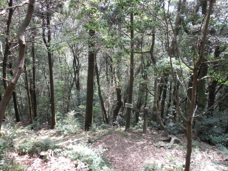 黒髪山自然休養林ー神社周辺天然林