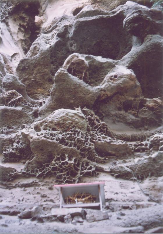 宮崎自然休養林ー磐窟神社