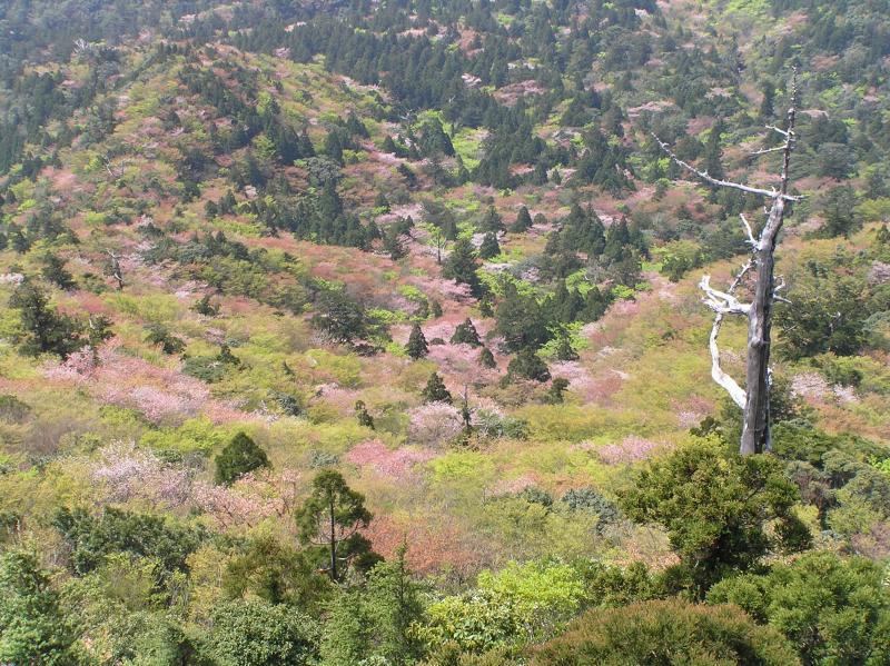 屋久島自然休養林ー小杉谷方面眺望