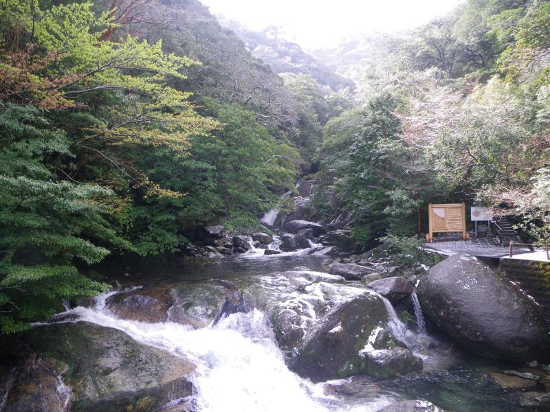 屋久島自然休養林ー白谷川